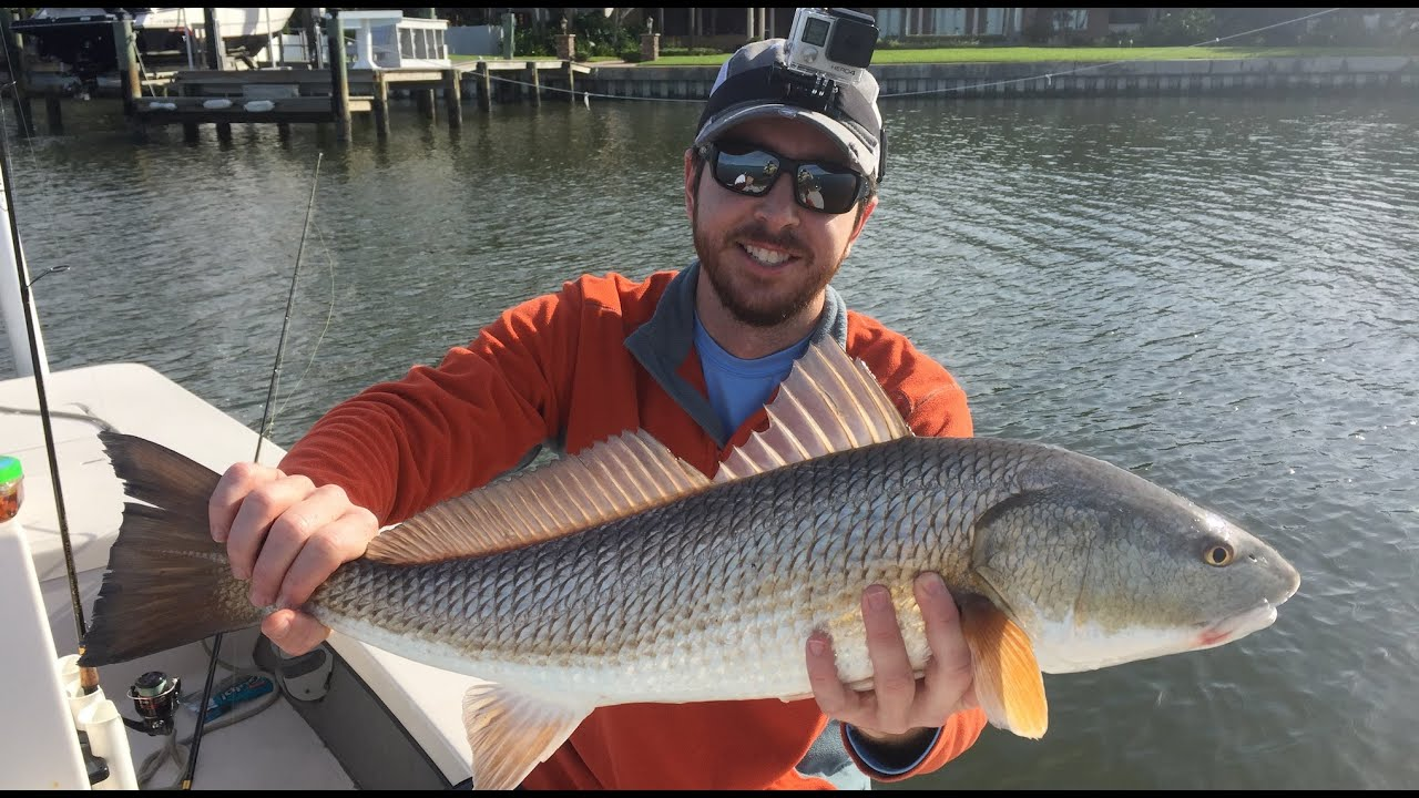 How to catch redfish in the winter after a cold front for How to fish for redfish
