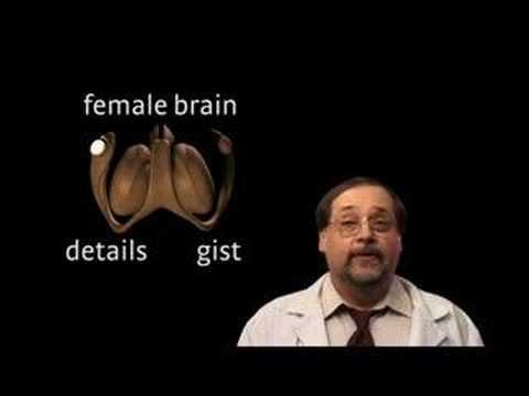 The male vs female brain differences apologise