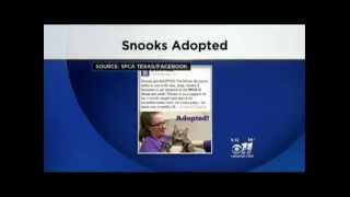 KTVT covers Supersize Snooks