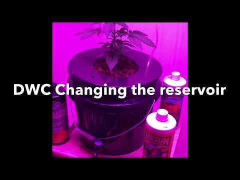 Stardawg Autoflower Dwc Changing The Reservoir