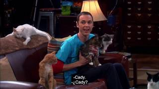The big bang theory- Sheldon becomes a crazy cat lady!!!!