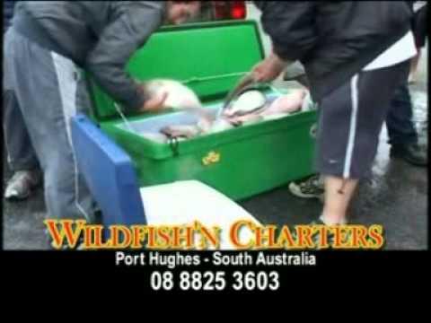 WildFishin' Charters - Pt Hughes SA.wmv