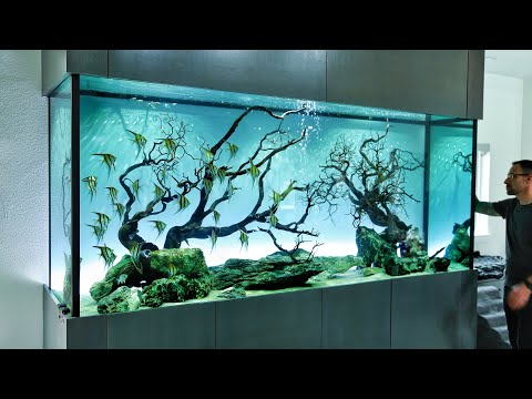 The Ultimate Angelfish Aquascape