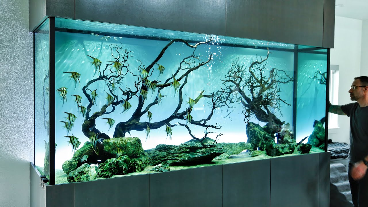 The Ultimate Angelfish Aquascape - YouTube
