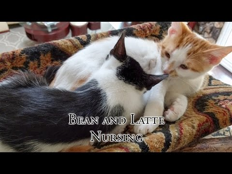 Bean and Latte Nursing