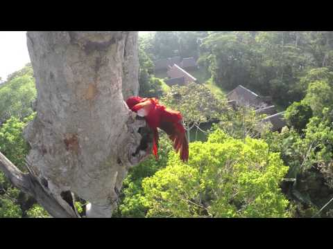 Macaw Nest - Behind the Scenes - Anthem for the Amazon