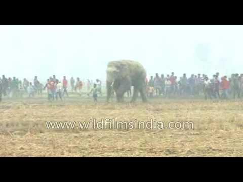 Elephant kills three in Malda, West Bengal