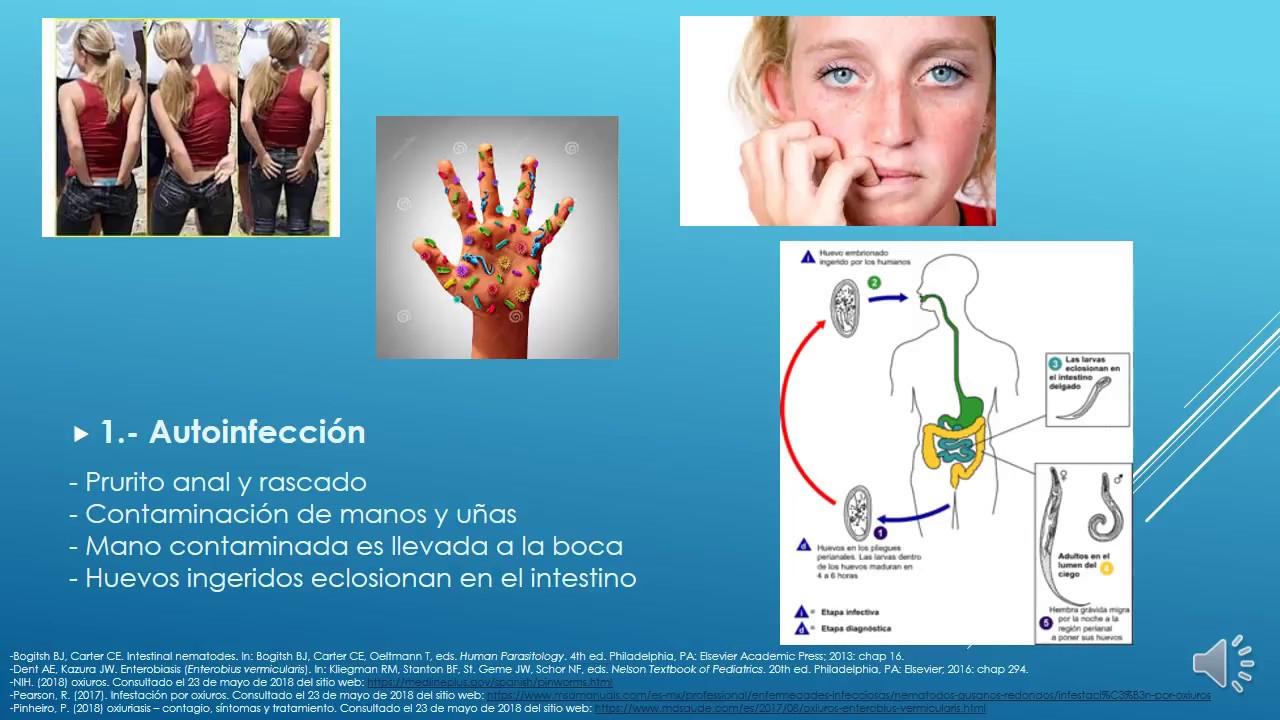 Que es enterobiasis u oxiuriasis - Ciclo de vida del oxiuros - p5net.ro