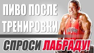 ПИВО ПОСЛЕ ТРЕНИРОВКИ. Спроси ЛАБРАДУ! (На русском языке)