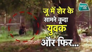 शेर के बाड़े में घुस गया युवक, फिर क्या हुआ? Viral | News Tak
