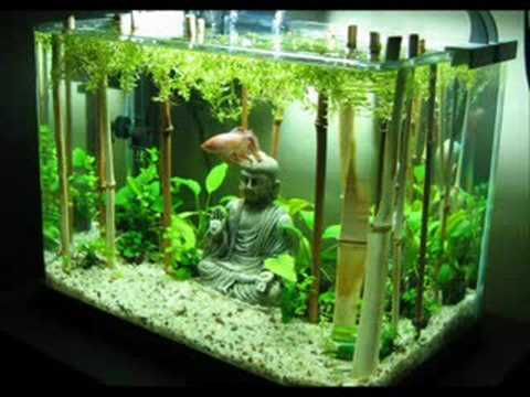 Fishtank Evolution Planted Tank Aquascapes Youtube
