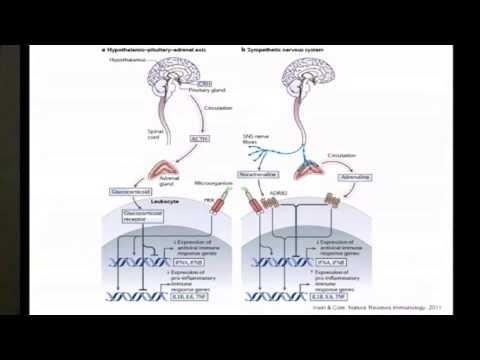 """FPR-UCLA CMB 2012: """"Social Regulation of Gene Expression"""" (Steve Cole, PhD, UCLA)"""