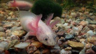 новый аквариум - подводный мир и его обитатели