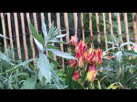 Regn och trädgård - 3 smarta saker att göra när det regnar - Odla mer effektivt