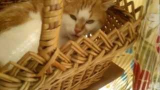 Шипящий кот.mp4