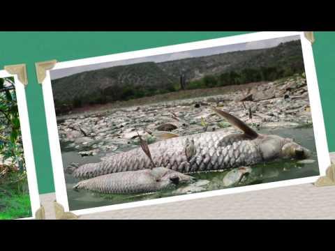 Truth Revolution - Worst Environmental Problems