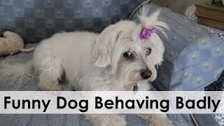 FUNNY DOG BEHAVING BADLY!