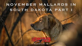 November Mallards in South Dakota Part I   The Grind S10:E5