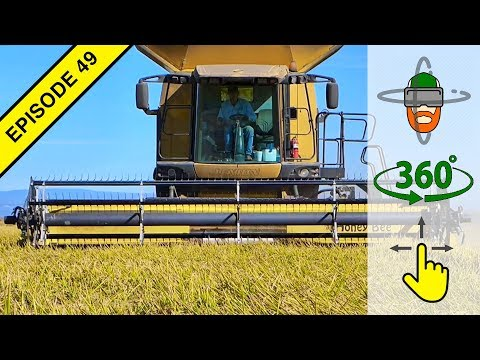 Rice Harvest in Virtual 360º Action!