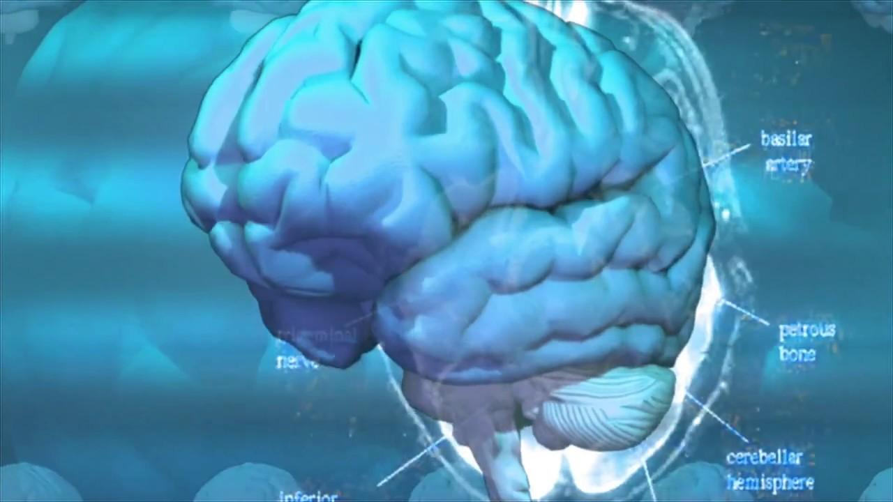Lesiones en la Medula Espinal y Cerebro- HogarTv por Juan Gonzalo ...