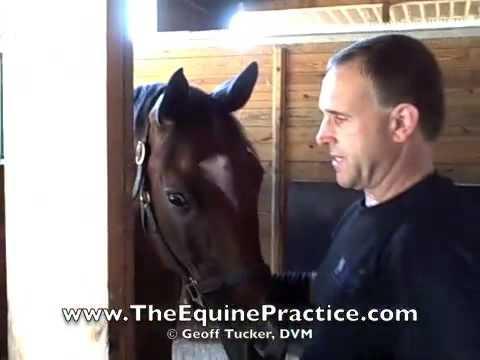 Geoff Tucker, DVM and Horsemanship Dentistry™