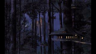 صوت صرصور الليل في غابة ----- Night Cockroach sound