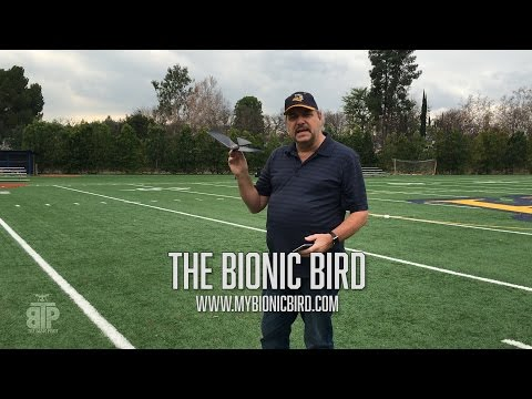 The Bionic Bird - first flight