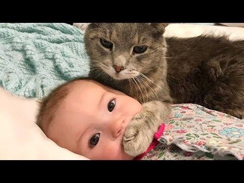 おかしい猫 - かわいい猫 - おもしろ猫動画 HD #265