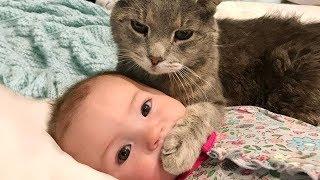おかしい猫 - かわいい猫 - おもしろ猫動画 HD #265 https://youtu.be/-...