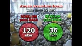 TEKNIS MUDAH TERNAK AYAM BROILER / PEDAGING - JAWA BARAT 2