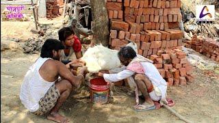 बकरी दुहे बुढावा   Bakari Duhe Budhawa   Bhojpuri Comedy   Vivek Shrivastava & Chirkut Ji