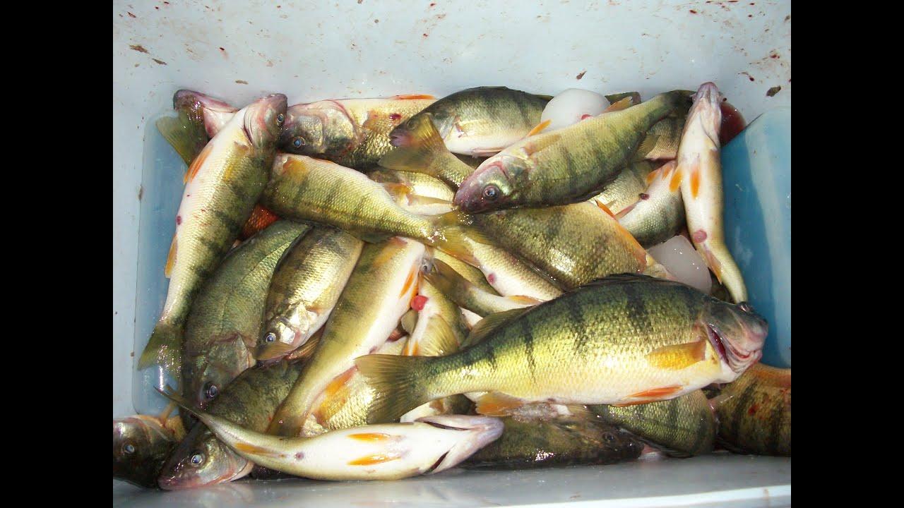 Lake Erie Yellow Perch Fishing 2015 Youtube