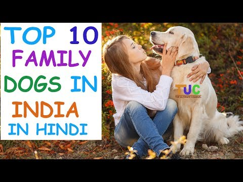 Top 10 Family Dogs in India In Hindi | Dog Facts | Popular Dogs | The Ultimate Channel