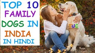 Top 10 Family Dogs in India In Hindi Dog Facts Popular Dogs The Ultimate Channel