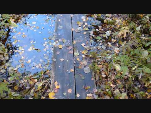 Pensieri d'autunno - Elisa, un senso di te...