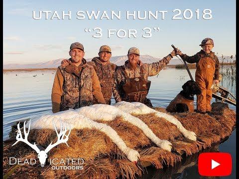 Utah Swan Hunt 2018