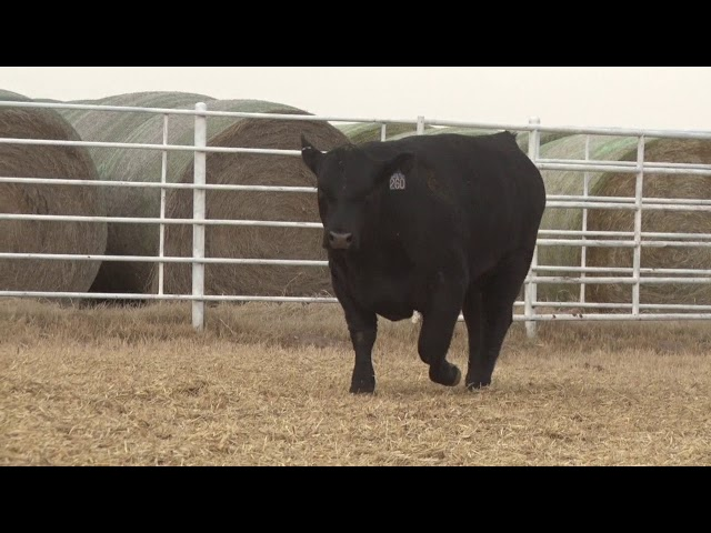 Express Ranches Lot 260