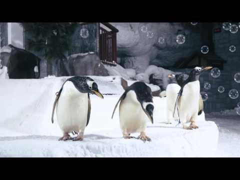Ski Dubai – Snow Penguins 5th Anniversary