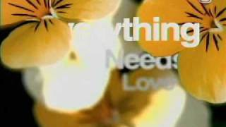 Every Thing Needs Love