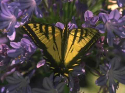 Les Papillons - Chausson - Jessye Norman