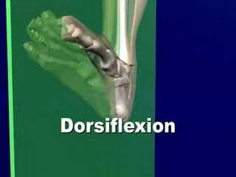 Cardinal Anatomic Planes of Human Foot & Body Biomechanic Pronation Supination