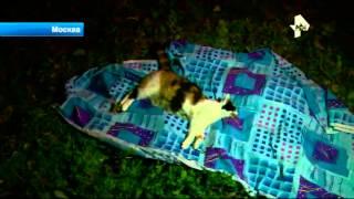 Москвичка выбросила кошек из окна