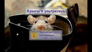 видео Отпугиватель грызунов в Москве