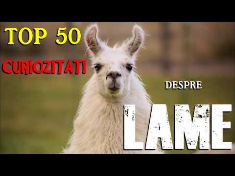 TOP 50 CURIOZITATI DESPRE LAME