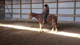 sorrel horse movie 001