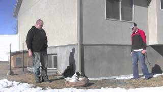 Utah Boot Camp Dog Training- Communicanine
