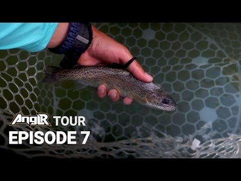 Fly Fishing Rainbow Trout on the Chattahoochee River National Recreation Area, Georgia