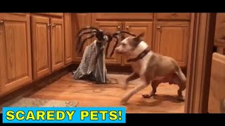 Scaredy pets, funny cats and dogs getting a little scared