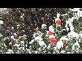 【4K】びっくり11月の初雪2016年