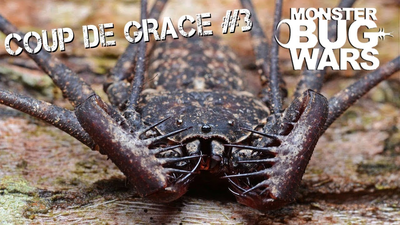 MONSTER BUG WARS | Coup De Grace Collection #3